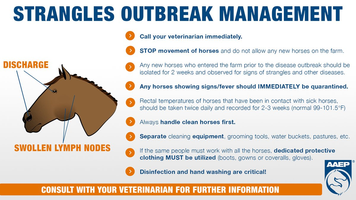 Strangles Outbreak Management